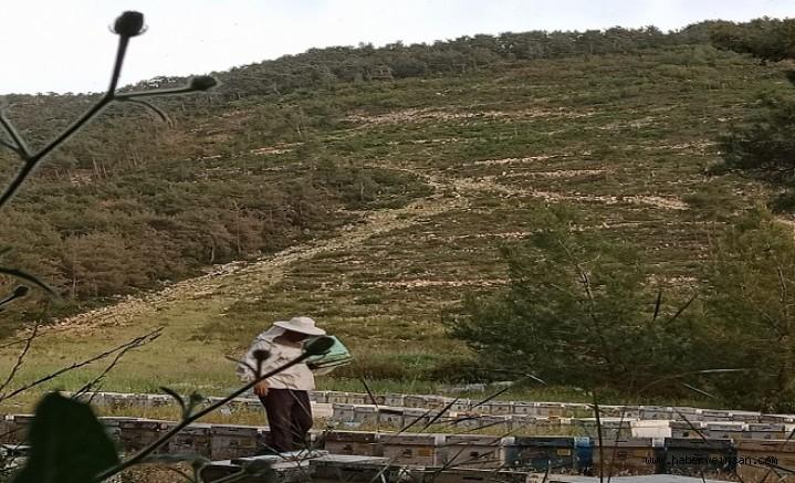 Bilirkişi, 30 Temmuz'da Tuzabat Bal Ormanlarında…