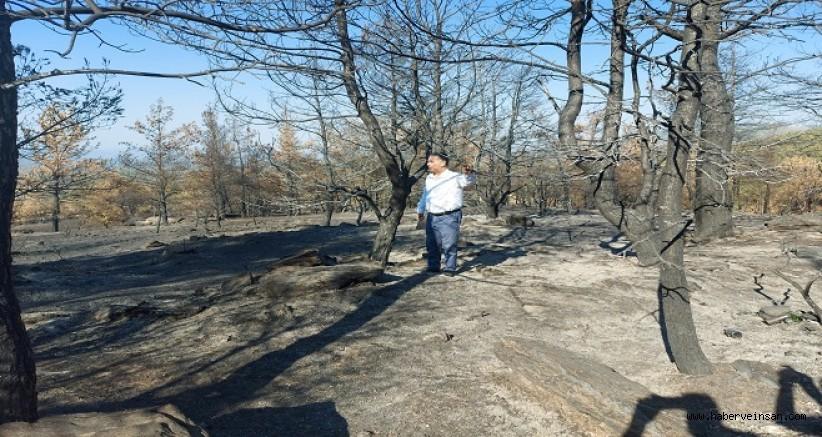 CHP'li Özcan'dan, Tarım ve Orman Bakanına, Orman Yangınlarıyla İlgili 41 Soru