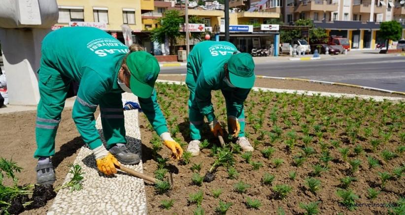 Milas Belediyesinden Caddelere, 60 Bin Çiçek Fidanı Dikildi
