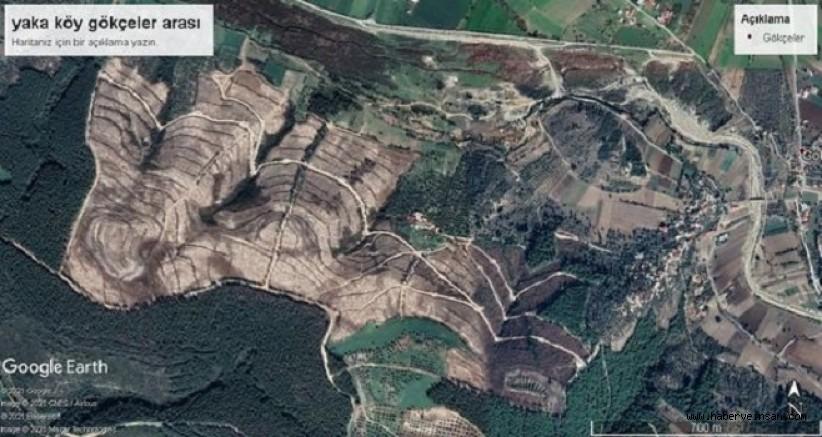 Milas Emekli-Sen'den, Milas Bölgesindeki Orman Katliamlarına Tepki
