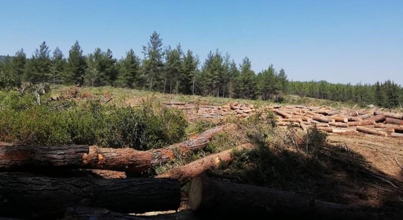 MUÇEP Milas Meclisi, Milas'taki Orman Katliamının Durdurulması İçin İmza Kampanyası Başlattı