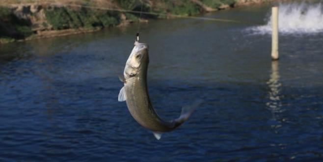 """Toprak Havuz Balık Üreticileri: """"Sahip Çıkanımız Yok!"""""""